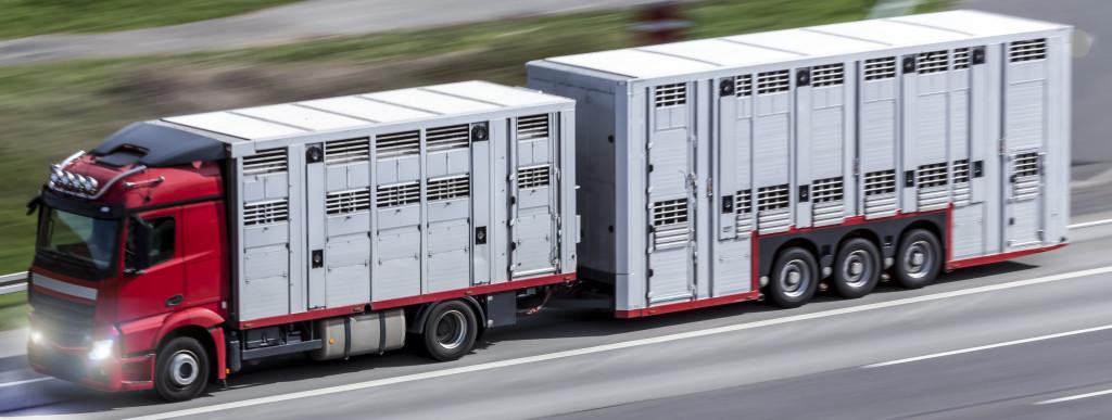 Jak przetransportować zwierzęta
